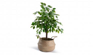 Plante artificielle - Ficus