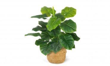 Plante artificielle - Alocasia