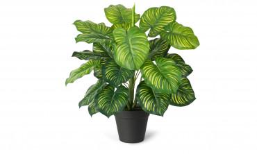 Plante artificielle - Maranta