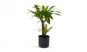 Plante artificielle - Dracaena