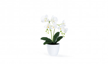 Orchidée - Plante artificielle