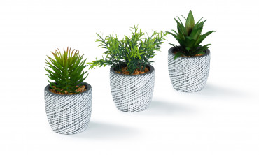 Succulents - Plantes artificielles
