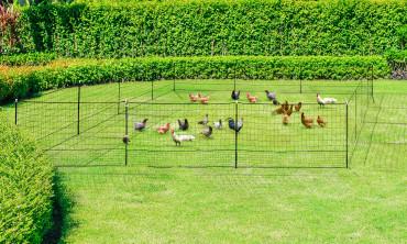 Kit clôture Nomade pour poules