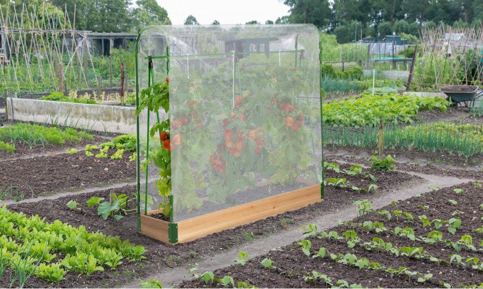 Serre diapositives serre de pousse Serre chassis froid Serre à Tomates tomates Jardin