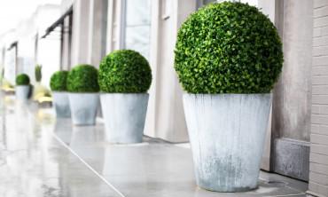 Plante artificielle - Set de buis