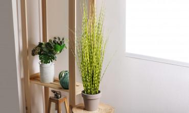 Plante artificielle - Prêle japonnais