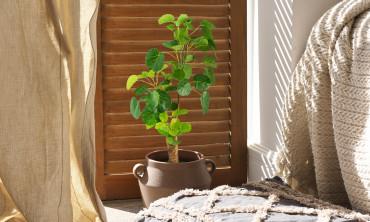 Plante artificielle - Aralia