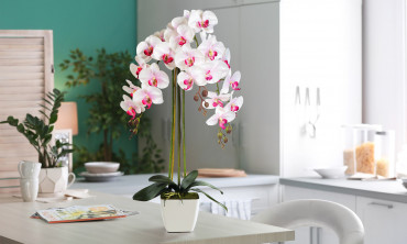 Plante artificielle - Orchidées 70cm